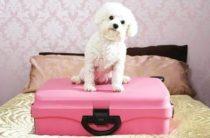 Гостиницы для домашних животных